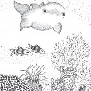 Sandros Dolphin Saves The Day Coloring Page